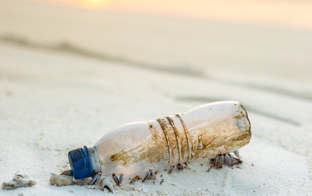 Le plastique: poison des poissons