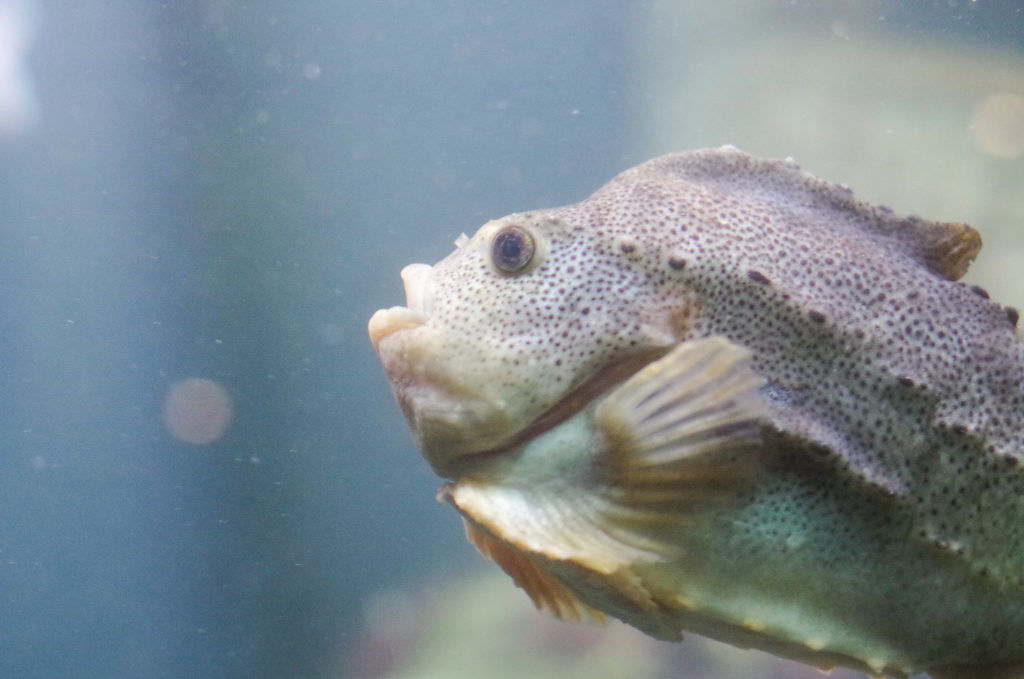aquarium Bergen
